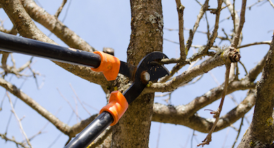 tree pruning in Durham, NC
